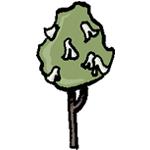 arbre aux mouchoirs