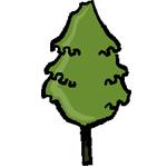 chêne à feuilles de Saule