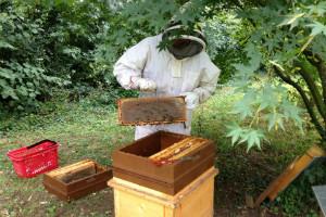 apiculteur - 300-200