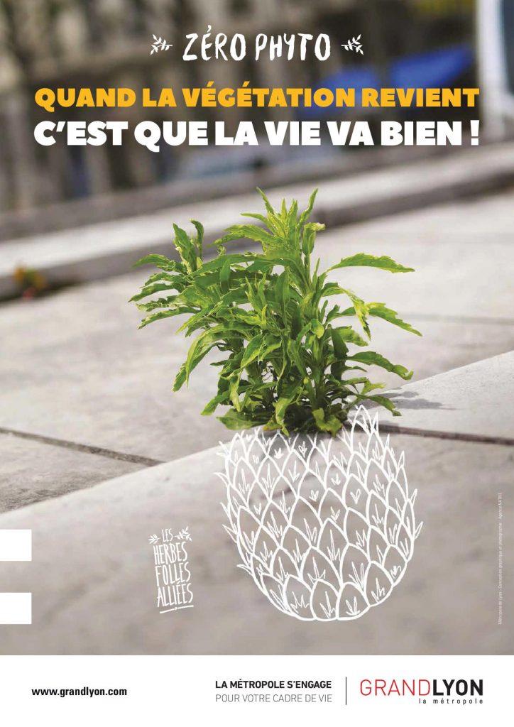 Campagne zéro phyto : ananas